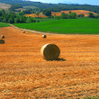 Toscana Landscape - Stock Photo