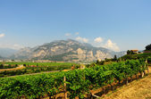 Italian Alps — Stock Photo