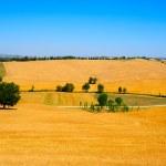 Tuscany Landscape — Stock Photo #3711340