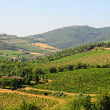 Chianti Region - Stock Photo