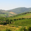 Chianti Region — Stock Photo #3711389