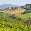 Hill Of Tuscany - Stock Photo