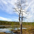 Dead tree near bog — Stock Photo