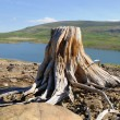 Stock Photo: Old stump