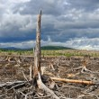 Stock Photo: Thundercloud above dead forest