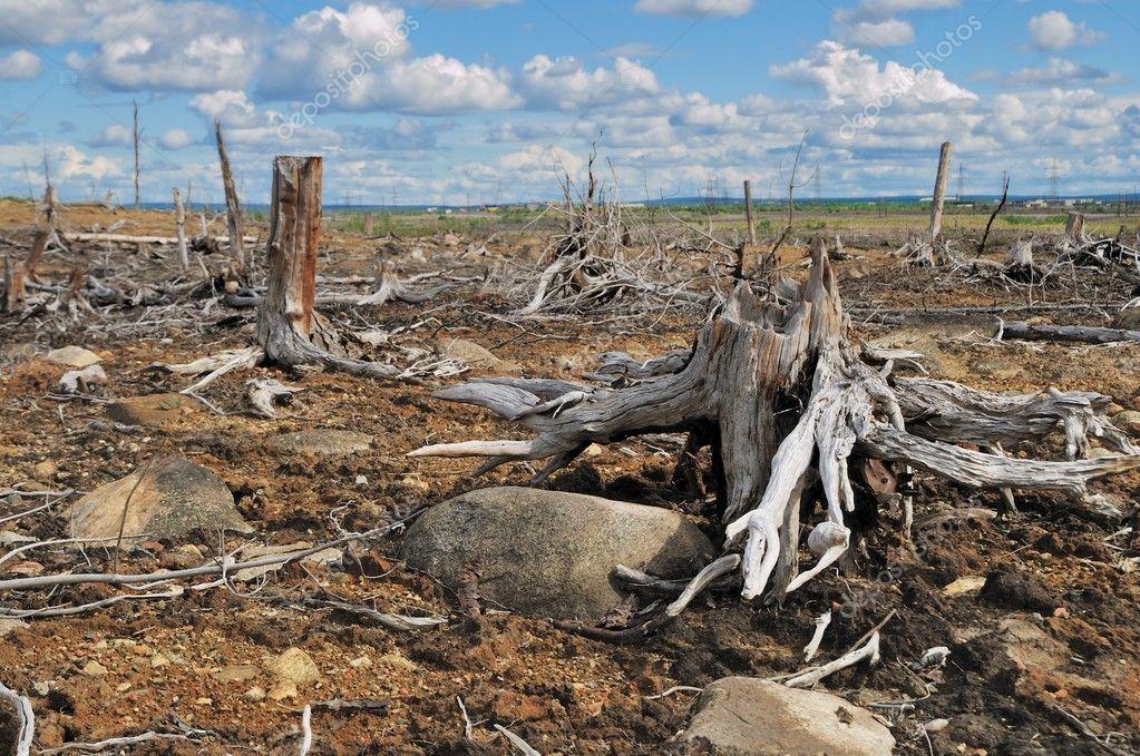 уничтожение природы. картинки