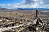 Old tree stump — Stock Photo