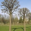 Stock Photo: Bare trees