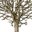Stock Photo: Bare tree