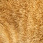 Cat fur texture — Stock Photo #2812755