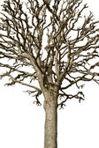Bare tree — Stock Photo