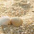 Stock Photo: Two seashells kissing