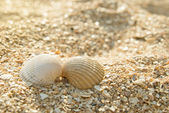 Two seashells kissing — Stock Photo