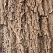 Tree Bark Background — Stock Photo #3124100