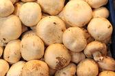 Mushrooms on market — Stock Photo