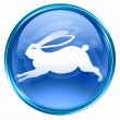 Rabbit Zodiac icon blue, isolated on white background. — 图库照片