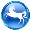 Horse Zodiac icon blue, isolated on white background. - Lizenzfreies Foto