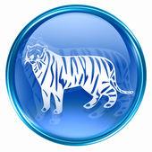 Tiger Zodiac icon blue, isolated on white background. — Stock Photo