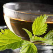 Tea nettle - Stock Photo