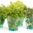 Stock Photo: Fresh herbs in glass