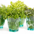 Stock Photo: Fresh herbs in the glass