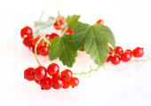 Red currant fruit and green leaves. — Stock Photo