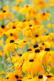 κίτρινα άνθη — Φωτογραφία Αρχείου
