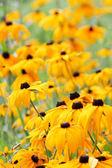 Yellow flowers — Stockfoto