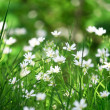 Beautiful white flowers — Stock Photo #3202745