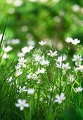 Beautiful white flowers — Stock Photo