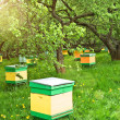 Royalty-Free Stock Photo: Apiary