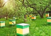 Bee-garden — Stock Photo