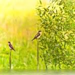 Birds — Stock Photo