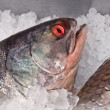 Fresh fish — Stock Photo #3714449