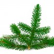 fir branch — Stock Photo #2810435