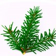 Fir branch — Stock Photo #2810447