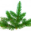 fir branch — Stock Photo #2810469