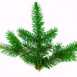 Fir branch — Stock Photo #2810508