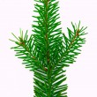 fir branch — Stock Photo #2810515
