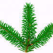 fir branch — Stock Photo #2810573