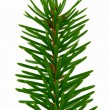 fir branch — Stock Photo #2810651