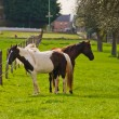 Beautiful horses — Stock Photo #3107140