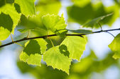 Green leaves season background — Stock Photo