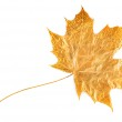 Gold maple leaf — Stock Photo #3098268
