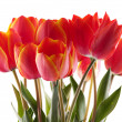 Red tulips — Stock Photo #3098306