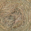 Hay rolls — Stock Photo #3449177