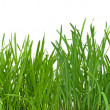 Green grass — Foto Stock #2756926