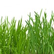Green grass — Stock Photo #2756926