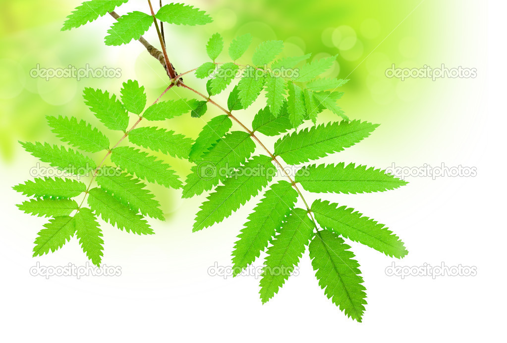 Green branch — Stock Photo #2756951