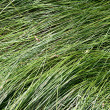 Soft long grass — Stock Photo